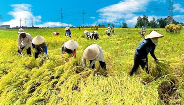 4 kinh nghiệm để có một mẫu website nông nghiệp không nhàm chán